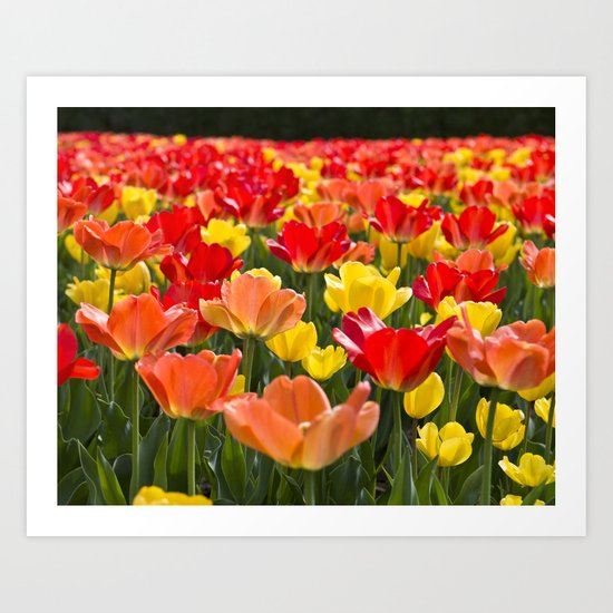 The Tulip Garden Art Print