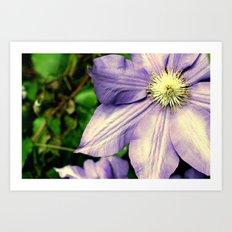Big Purple Flower Art Print