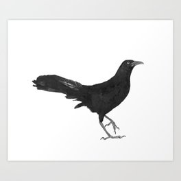 Great-tailed grackle Art Print