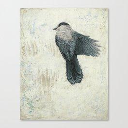 Canada Gray 2 Canvas Print