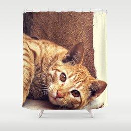 Cat roux Shower Curtain