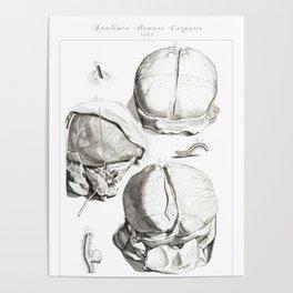 Human Anatomy Art Print HEAD BRAIN SKULL Vintage Anatomy, doctor medical art, Antique Book Plate, Me Poster