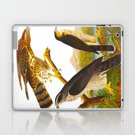 Goshawk Bird Laptop & iPad Skin