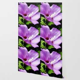 Rose Of Sharon A Summer Bloom Wallpaper