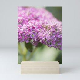 Sedum 10 Mini Art Print