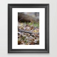 Seedling - A Framed Art Print
