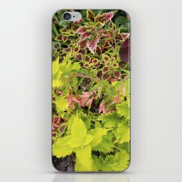 Foliage Fiesta With A Touch Of Begonia iPhone Skin
