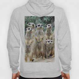 Meerkat20160208 Hoody