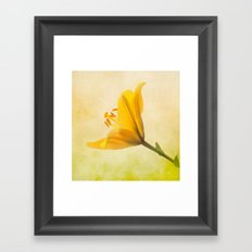 Lemon Lily Framed Art Print