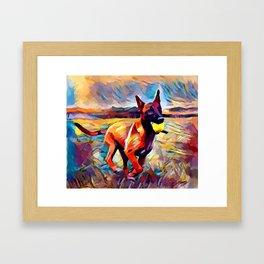 Malinois Framed Art Print