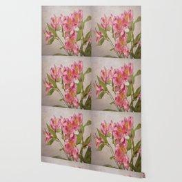 Pink Peruvian Lilies Alstroemeria Wallpaper