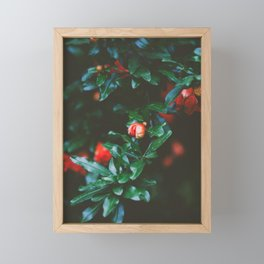 Pomegranate Study, No. 1 Framed Mini Art Print