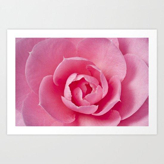 Camellia Close Up Art Print