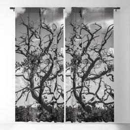 Ancient Tree, Survivor, Alive Blackout Curtain