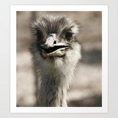 Ostrich Art Print