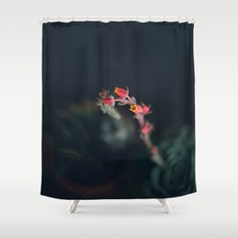 Succulent (3) Shower Curtain
