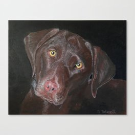 Inquisitive Chocolate Labrador Canvas Print