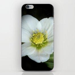 christmasrose on black -2- iPhone Skin