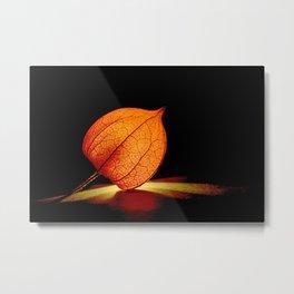 Lampionflower Metal Print
