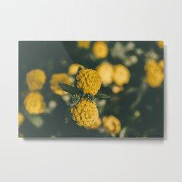 The Yellow Lantana Metal Print