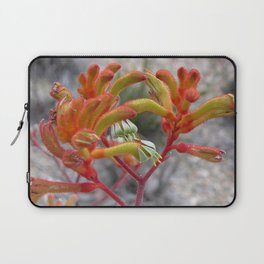Orange Kangaroo Paw Flowers Laptop Sleeve