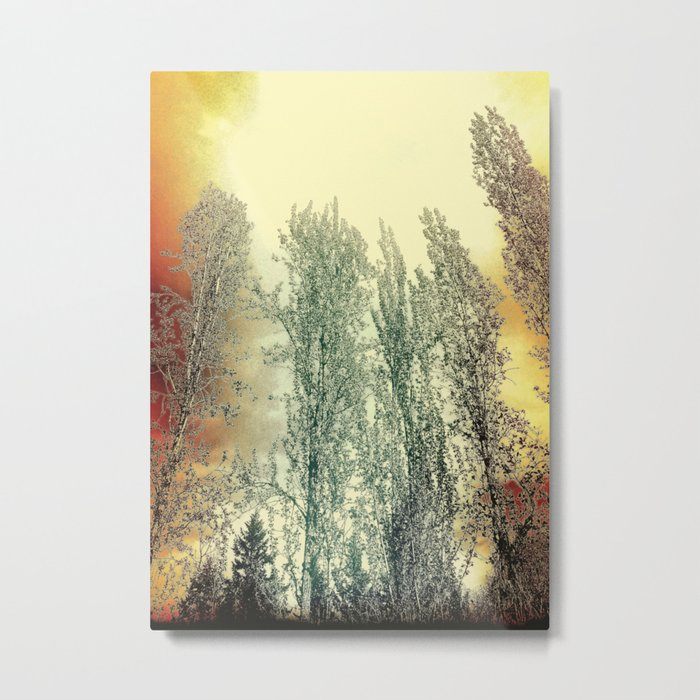 Autumn Poplars, Sunlight Dreaming About You Metal Print