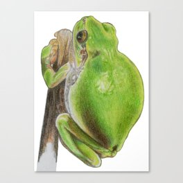 Plump Green Tree Frog Canvas Print