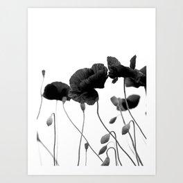 Poppy (black and white) Art Print