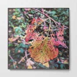Delicate Autumn Leaf Metal Print