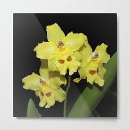 Glorious Golden Orchid - Odontonia Yellow Parade Alpine Metal Print