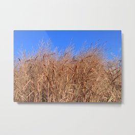 Autumn Grasses Under a Clear Blue Sky Metal Print