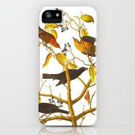 Rusty Grackle Bird iPhone Case