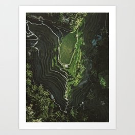 Lush Green Bali Rice Fields (Tegalalang) During Sunrise | Aerial Photography Art Print