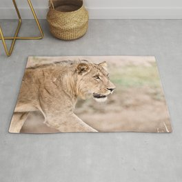 Young Male Lion, South Africa Rug