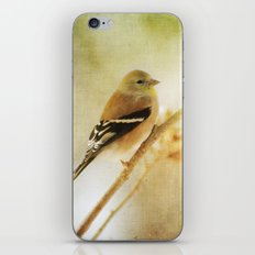 American Gold Finch iPhone & iPod Skin