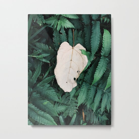 Nature Walk 001 - White Leaf Metal Print