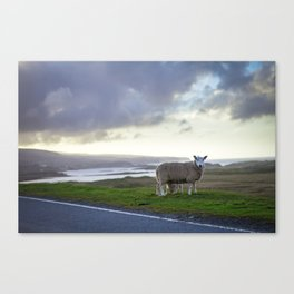 Roadside on Skye Canvas Print