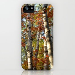 Birch Fall Colors iPhone Case