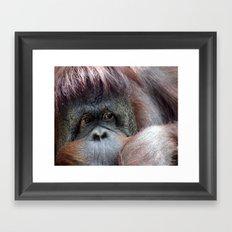 Pongo Framed Art Print