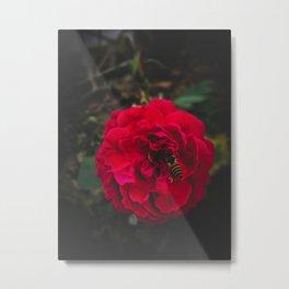 Flower Photography by rahul sharma Metal Print