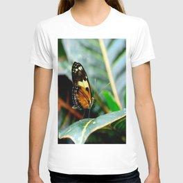 Ismenius Tiger Butterfly-2 T-shirt