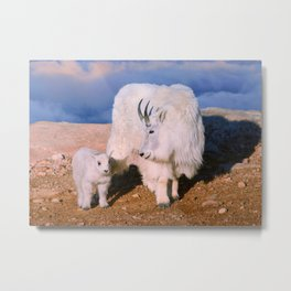 Above The Clouds. Mother and Kid - A young  Mount Evans CO USA Metal Print