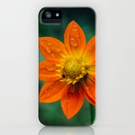 Morning dew and midday stroll iPhone Case