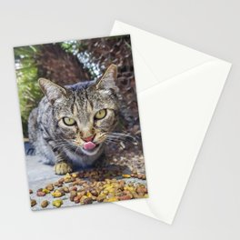 Grey cat eating Stationery Cards