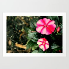 Pink/Purple Flower Art Print