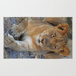 Young lion - Africa wildlife Rug