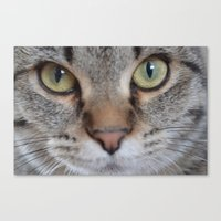 arya Canvas Prints featuring Cat by Kellie Eickstead
