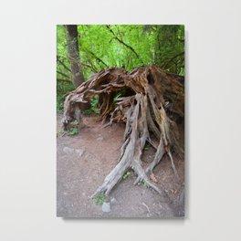 Dragon Roots Root Tree Trees Forest Stump Hiking Northwest Washington Oregon Nature Outdoors Plants Metal Print