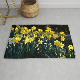 DAFFODILS IN THE LATE SPRING AFTERNOON LIGHT Rug