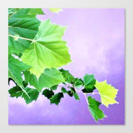 Sycamore Leaves Over the Water Canvas Print